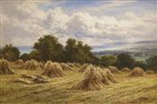 Harvest Time, Farleigh Nr Hastings