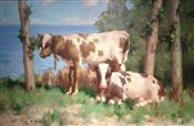 Calfs Resting by the Sea, David Gauld