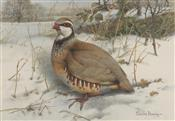 French Partridge