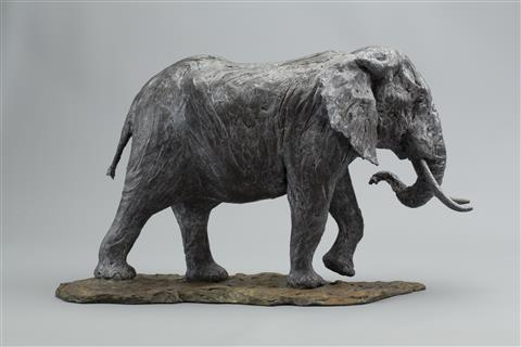 Knox Field | African Bull Elephant